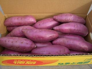 seibo2005-5.JPG